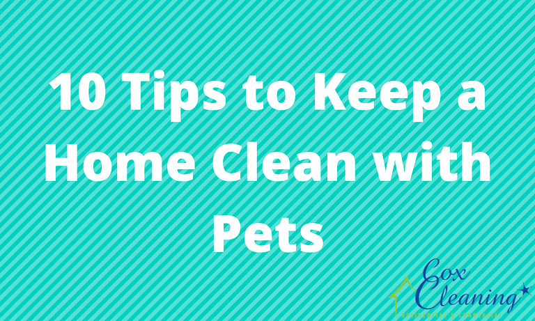 10 Tips to Keep a Home Clean with Pets