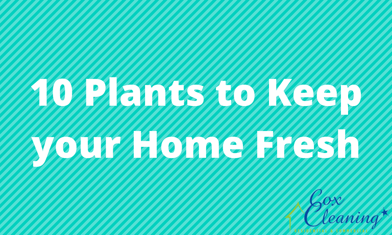 10 Plants to Keep your Home Fresh