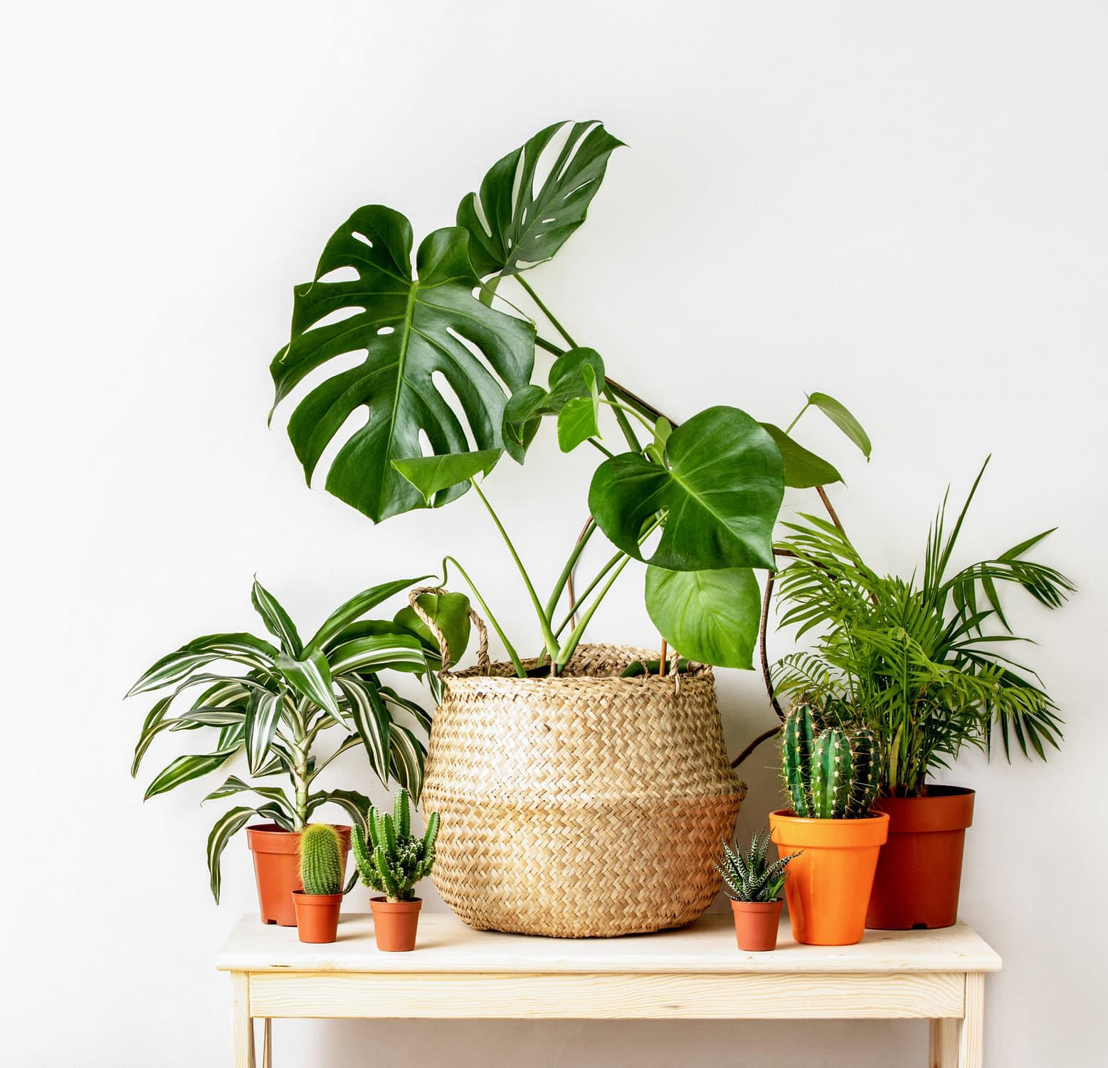 Read more about the article 10 Plants to Keep your Home Fresh